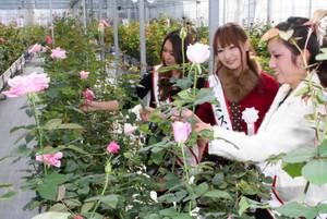 温室内で咲き誇るバラを楽しむミス伊勢志摩の3人=志摩市の志摩ローズファームで