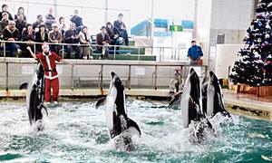 クリスマスにちなんで開かれているショー=のとじま水族館で
