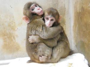 抱き合ってかわいらしい姿を見せるカンパチ(左)とホタテ=東山動物園提供