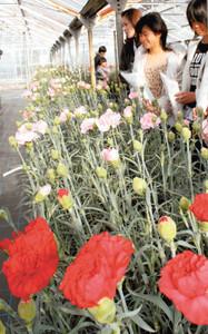 赤やピンクなど、さまざまな彩りを楽しめる「かわづカーネーション見本園」=河津町で