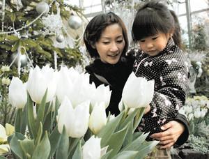 白いチューリップを観賞する親子連れ=安城市のデンパークで