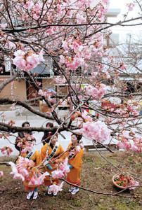 開花促進剤の試験木前で記念写真を撮る観光客ら=河津町で
