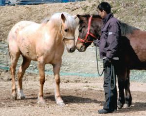先輩の馬とあいさつを交わす粕毛の牝馬(左)=春日井市廻間町のげんき牧場で