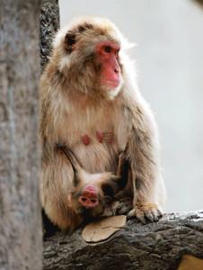 母親のアナゴに抱かれる赤ちゃん