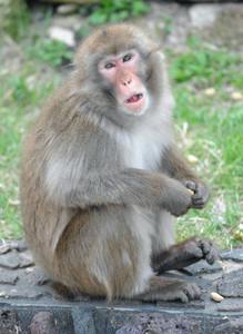 父親のムコドノ=名古屋市千種区の東山動物園で