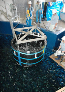 バケツから水槽へマイワシを搬入する飼育員ら=港区の名古屋港水族館で
