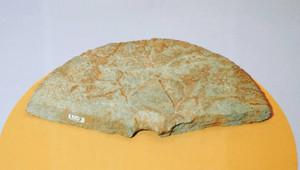 川崎遺跡から出土した国内最大の環状石斧=長浜城歴史博物館で