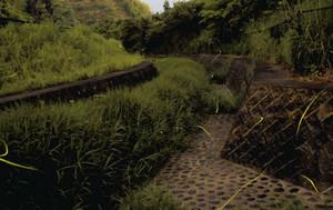PA内にある人工の小川を飛び交うゲンジボタル=藤枝PAで