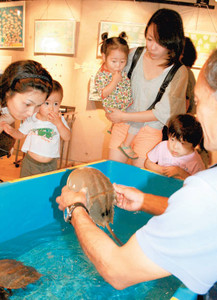 アメリカカブトガニを興味深そうに眺める来館者=浜松市西区舞阪町弁天島で