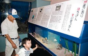 地方名を持つ海の生き物を集めた企画展「がまごおりほうげんすいぞっかん」=蒲郡市竹島水族館で