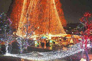 メタセコイアなどが電球で飾られた会場=岐阜市の長良公園で