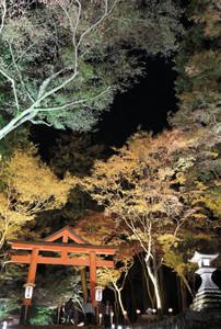 ライトアップされ、境内を幻想的に彩る紅葉=大津市坂本で