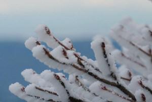 見た目から「エビのしっぽ」と呼ばれる厚くできた樹氷