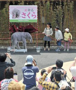 命名者の(奥左から)渡辺知里さん、山中孝太郎君、鶴田和佳さんらによって除幕されるアジアゾウの赤ちゃんの名前=名古屋市千種区の東山動物園で