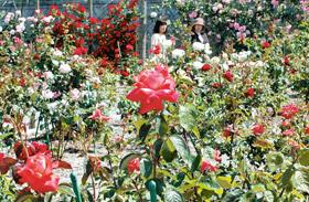 今が見頃の奥殿陣屋「花ぞの苑」