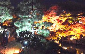 ライトアップされた紅葉が楽しめる玄宮園=彦根市金亀町で