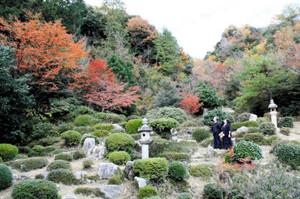 山の紅葉が見頃を迎えた国名勝の書院庭園=敦賀市の西福寺で