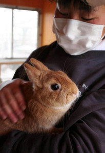 触られても驚かないよう練習に励むネザーランドドワーフ=飯田市の市立動物園で