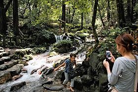 涼感が漂う「瓜割の滝」=福井県若狭町天徳寺で