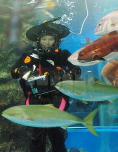 ハロウィーンにちなみ魔女の衣装で潜水するダイバー=魚津水族館で