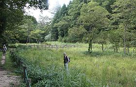 300種類以上の植物が自生する鯉が窪湿原=いずれも岡山県新見市で