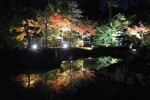 ライトアップで池に映り込む樹木=野洲市の兵主大社で