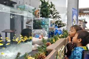 熱帯の魚もクリスマス気分?水槽に見入る子どもたち=各務原市川島笠田町のアクア・トトぎふで