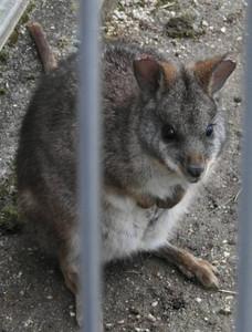 すくすく育っているフラペチーノ=飯田市立動物園で