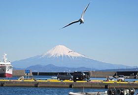 駿河湾越しに、くっきりとした姿を見せる富士山=静岡県焼津市の小川港で