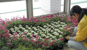 ハート形に花壇を整える職員=砺波市高道で