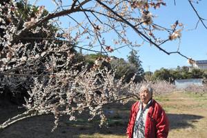 白い花をほころばせる南高梅の木=いずれも志摩市志摩町越賀で