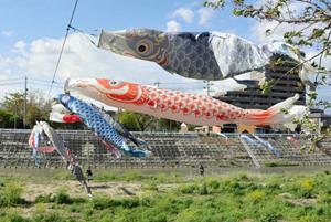 風になびくこいのぼり=松阪市内五曲の阪内川親水公園はなぞの広場で