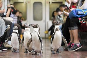 2011年に実施されたペンギン列車