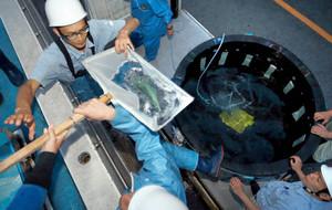 慎重に搬入するスタッフ=名古屋市港区の名古屋港水族館で