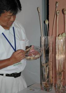 展示が始まったさや付きの茎と、種の入ったシャーレを手にする職員=砺波市中村で