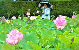 雨の中、かれんに咲く大賀ハス=長久手市郷前で