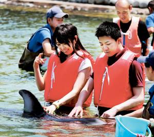 イルカとのコミュニケーションを楽しむ参加者=七尾市ののとじま臨海公園で