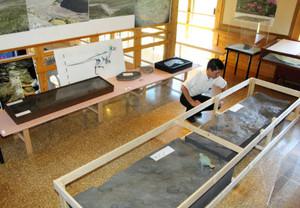 神通層群で見つかった1億1000万年前の恐竜の足跡のレプリカ=富山市八尾化石資料館「海韻館」で