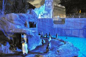 昨年のナイトZOOでライトアップされたペンギン舎=名古屋市千種区の東山動植物園で(同園提供)