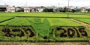 見ごろが近づいてきた田んぼアートの「ごん吉くん」=半田市岩滑高山町で