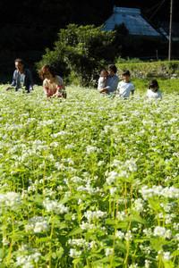 純白の可憐な花が見頃を迎えたソバ畑=29日、浜松市北区引佐町で(袴田貴資撮影)