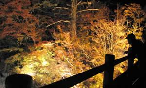 ライトに照らされて浮かび上がる紅葉=高山市奥飛騨温泉郷の旧中尾橋で