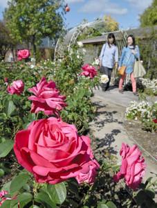 園内を華やかに彩り、来園者の目を楽しませている秋バラ=大津市柳が崎で