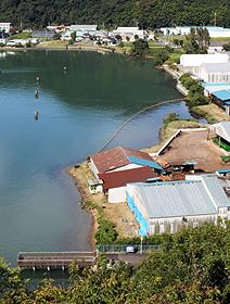 引き揚げ者が上陸した舞鶴湾。引揚援護局跡の工場の下に復元された平引揚桟橋が見える=いずれも京都府舞鶴市で