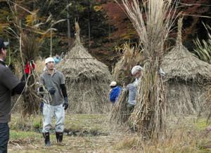 刈り取った茅を円すい状に積み上げる「茅ニュウ」を作る村民ら=白川村荻町で