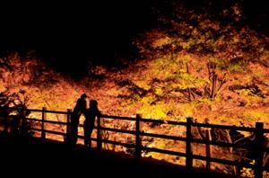 ライトアップで闇の中に浮かび上がるモミジ=豊根村下黒川の「大入の郷」で