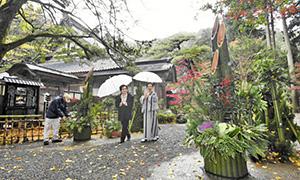 冷たい雨が降り、晩秋の風情漂う境内に設置された一対の門松=福井市の大安禅寺で