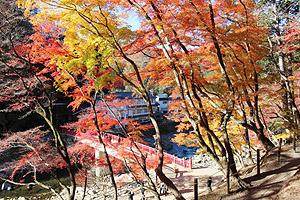 香積寺の参道を彩るカエデなど=豊田市足助地区の香嵐渓で