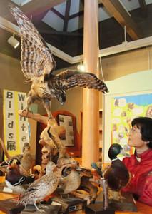 クマタカなどの野鳥の剥製が展示されている会場=伊賀市の県上野森林公園で