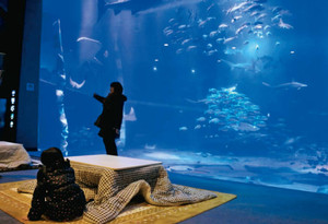 来館者に癒やしのひとときを楽しんでもらおうと設置したこたつ=七尾市ののとじま水族館で